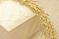 美味しいお米のイメージ